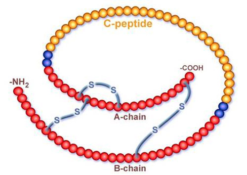 Other---C-Peptide.jpg